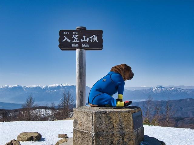 入笠山の山頂に立つブルドッグ