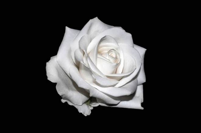 Kelly Clarkson, Halsey, Cyndi Lauper to Wear White Roses to the Grammys in Support  Time's Up