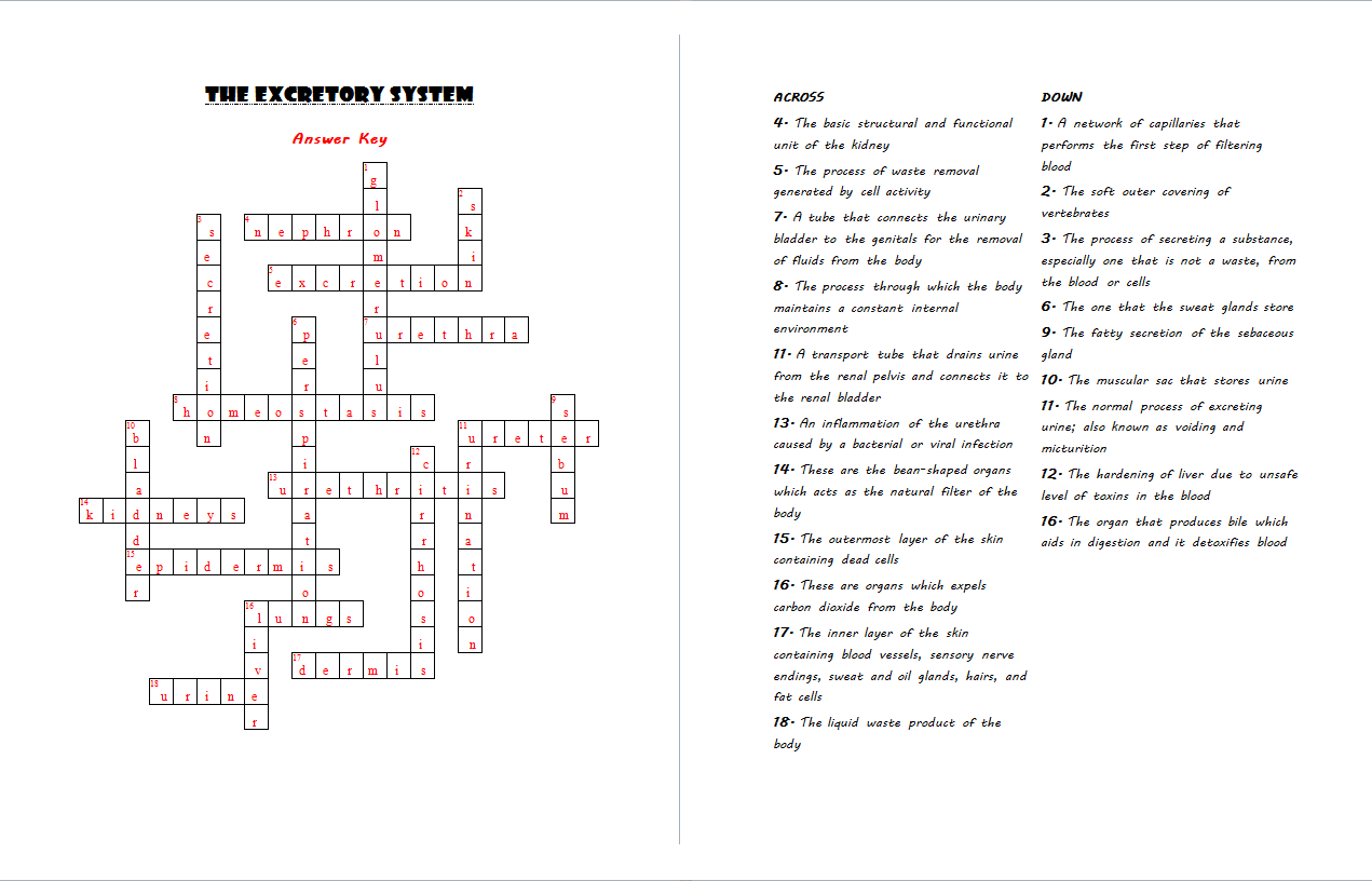 The Excretory System Crossword Puzzle Answer Key