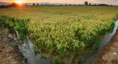 Excursión al Delta del Ebro desde Castellón – Siembra del arroz y Paseo en barco