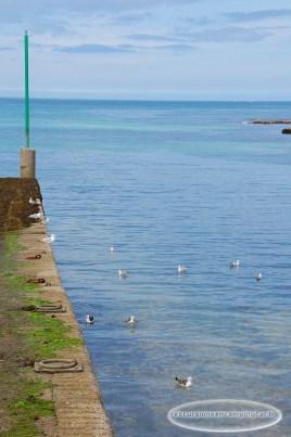 Pointe de Séhar, La faune