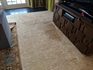 Carpet Stains (Before)