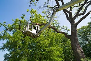 Executive Outdoor Living - Pruning and Removal on Executive Outdoor Living id=80387