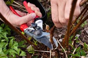 Executive Outdoor Living - Pruning and Removal on Executive Outdoor Living id=54414