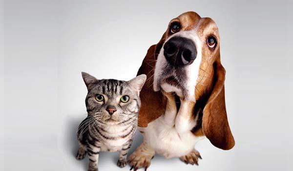 Mascotas y alarma , ¿Es posible?