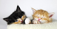 2cats-1