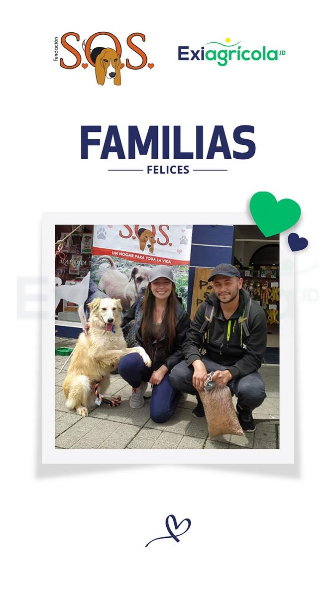 FAMILIAS FELICES 01