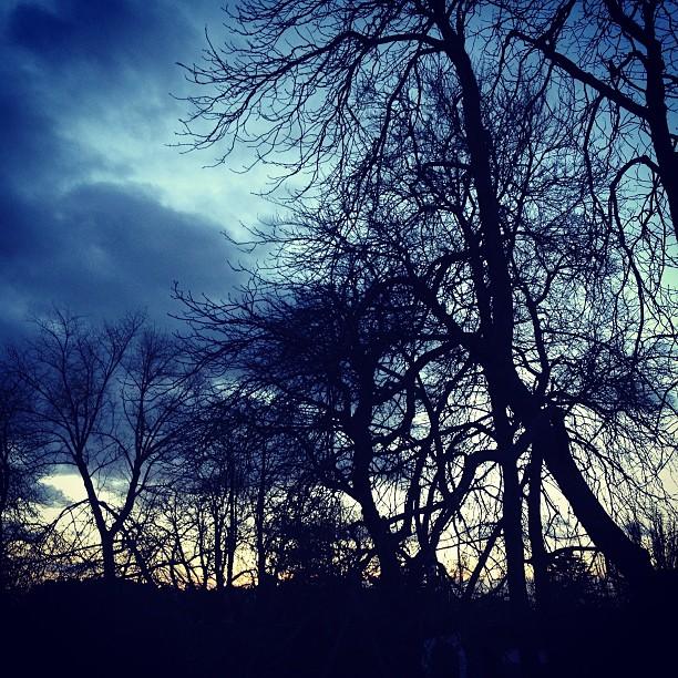 1365__365__trees__sky__winter