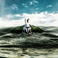 The Duck At Sea