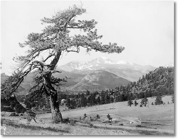 Long's Peak and Big Run from Black Cañon