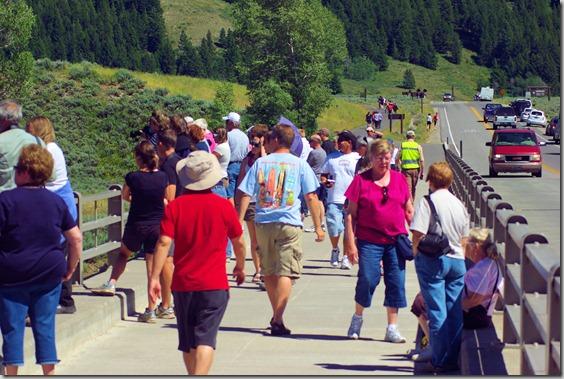 Critter Crowd on Snake River bridge at Moose, Wyoming.
