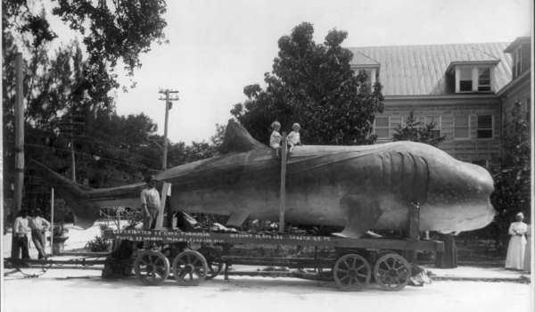 45 ft long shark (whale?) on trailer; 2 children on its back