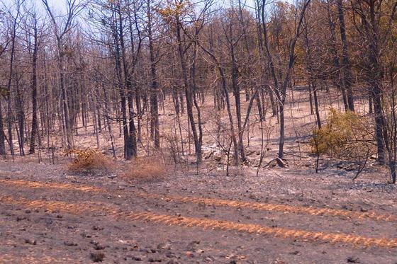 Arkansas 2012 -- Extreme Drought & Fire Danger.