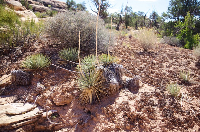 Needles District, Canyonlands National Park, September 26, 2011
