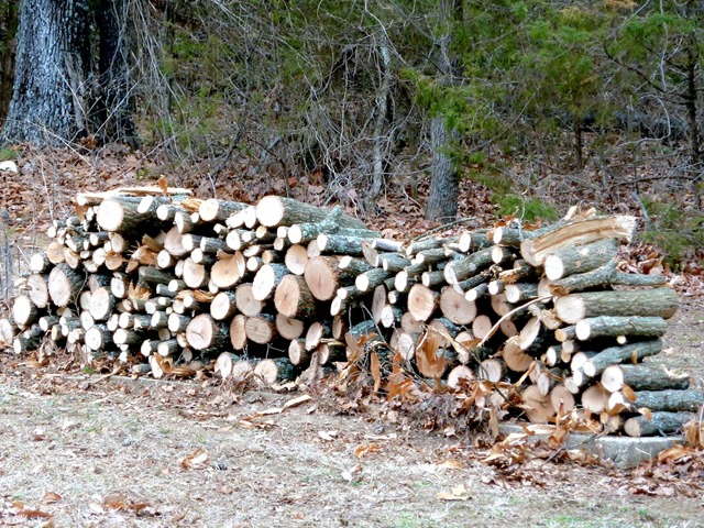 firewood from storm damage