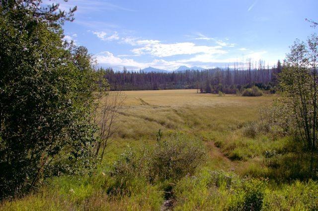Meadows, Glacier National Park, Montana, August 28, 2014