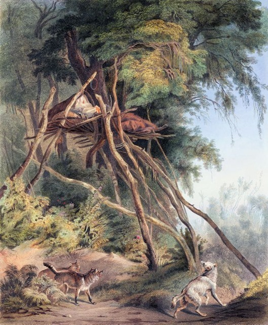 tombs-of-assiniboin-indians-on-trees-plate-30-from-volume-1-of-travels-in-the-interior-of-north-1832  1005255.png
