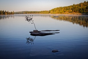 Still Life, lake of Two Rivers; Algonquin Park