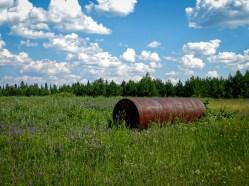 Meadow, Algonquin Provincial Park