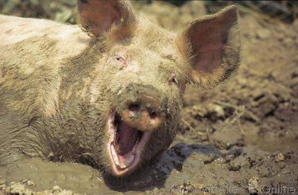 Hast  Du immer noch Schwein?