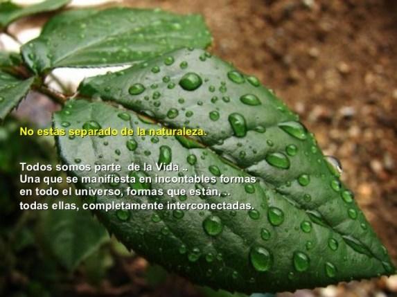 Conecta con la naturaleza...