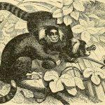 Clarice Lispector's MONKEYS