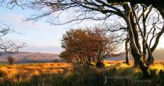 822-julia-amies-green-the-golden-colours-of-the-moor-just-before-sunset-on-saturday
