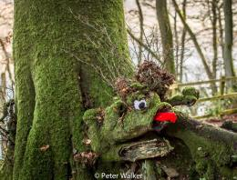 705-peter-walker-the-monster-of-wimbleball-lake-was-spotted-on-wednesday-28th-december-2016