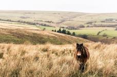 309-josh-britton-exmoor
