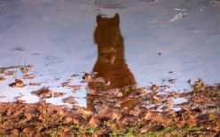 321-jochen-langbein-exmoor-pony-in-a-frozen-puddle-from-this-weekend
