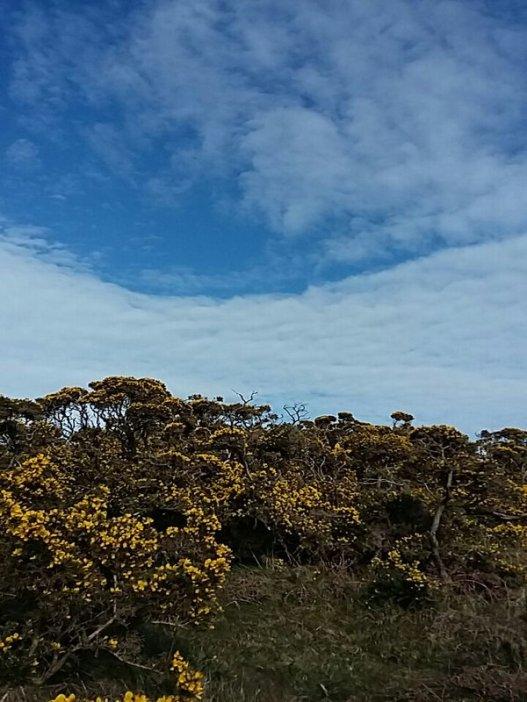 Exmoor Skies