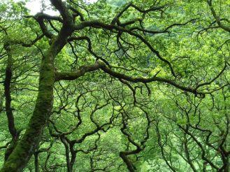 Summer woods at Watersmeet
