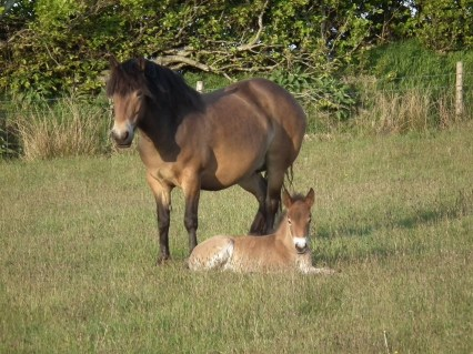 Dora and Filly
