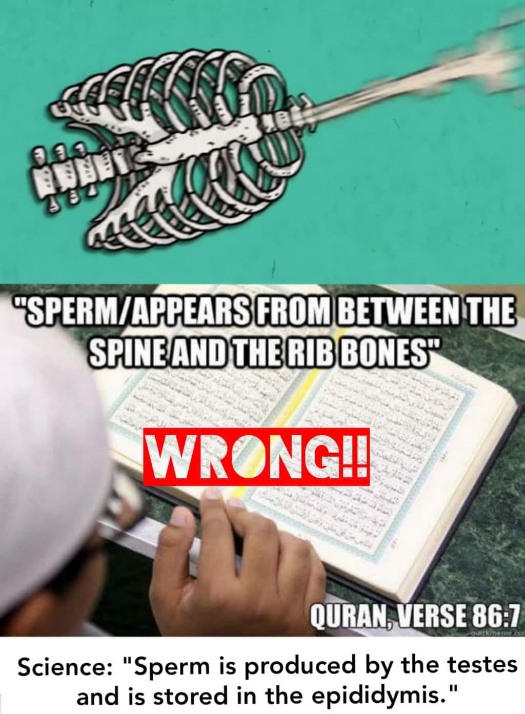 Scientific error quran source of sperm appears between spine and rib bones