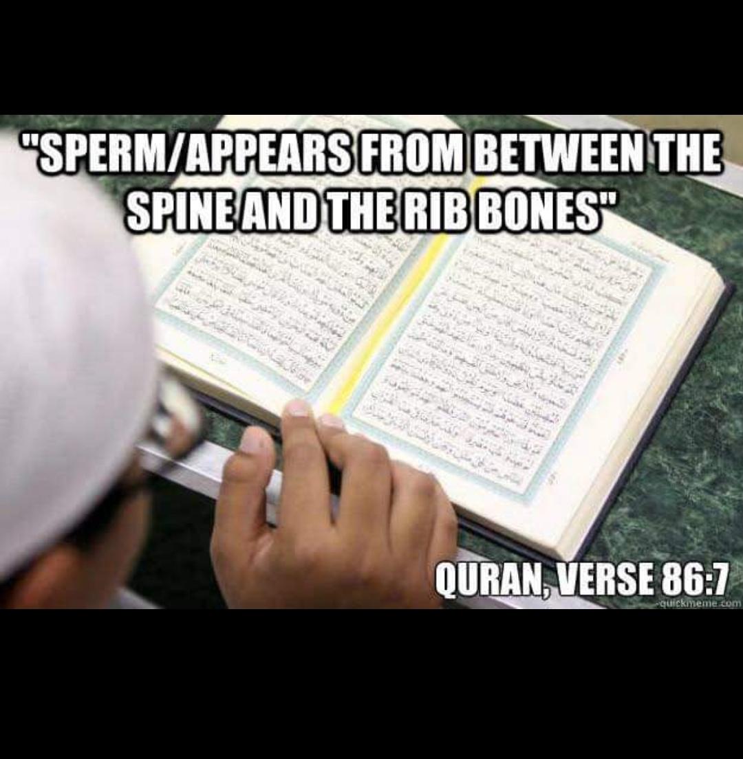Scientific error quran source of sperm appears between spine and rib bones 86:7 testes epiddymis