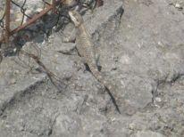 21. a lizard