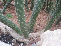 23. plant in sheperdfields