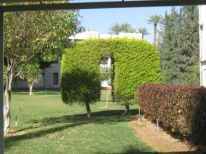 17. our garden in Jericho