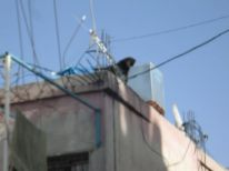 08. a watchdog in Deheisha camp