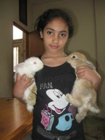 17. rabbits
