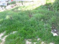 07. green grass