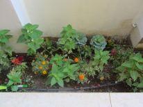 11. a part of the garden