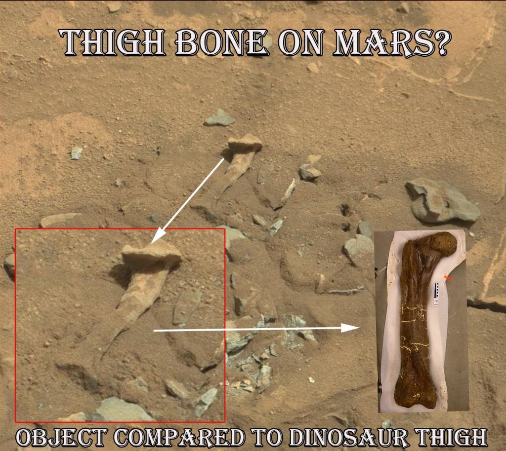 NASA Source Image of thigh bone