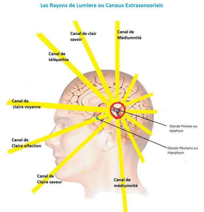 Le clair-ressenti fait partie des nombreuses capacités subtiles que l être  humain possède avec la claire-voyance, la claire-audience, la  claire-olfaction, ... 38c6a8ac1bf5
