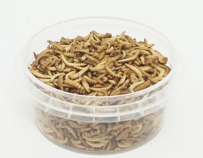 essbare Buffalowürmer 10g, Dose offen