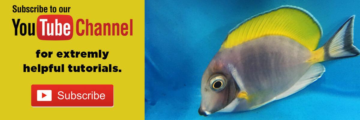 Freshwater fish banner 4