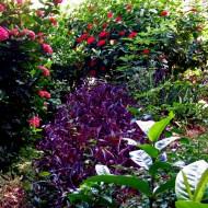 Flowers of Bequia_07