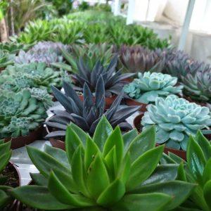 Indoor Succulents and cactus
