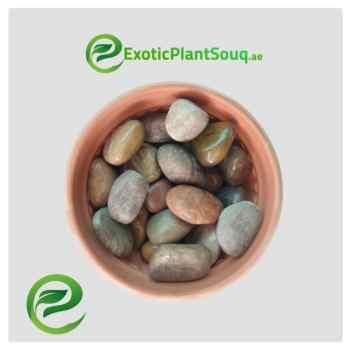 Mix Red Semi-polished Stone / Pebbles 3