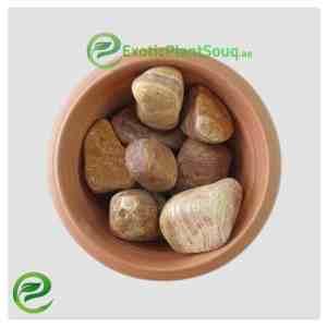 Pebbles Stones Red Line
